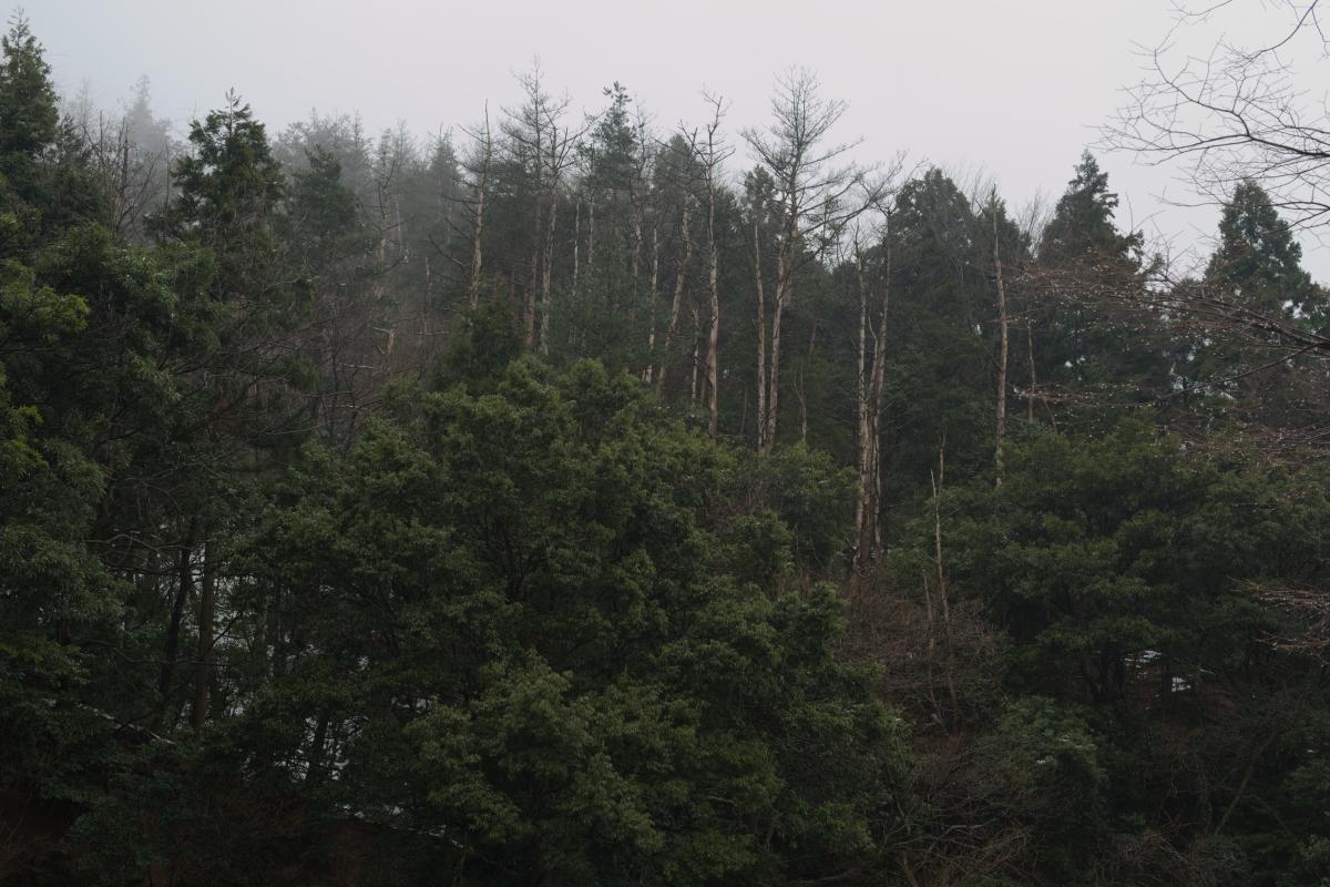 DSC_6688 お正月らしく 五頭山麓いこいの森