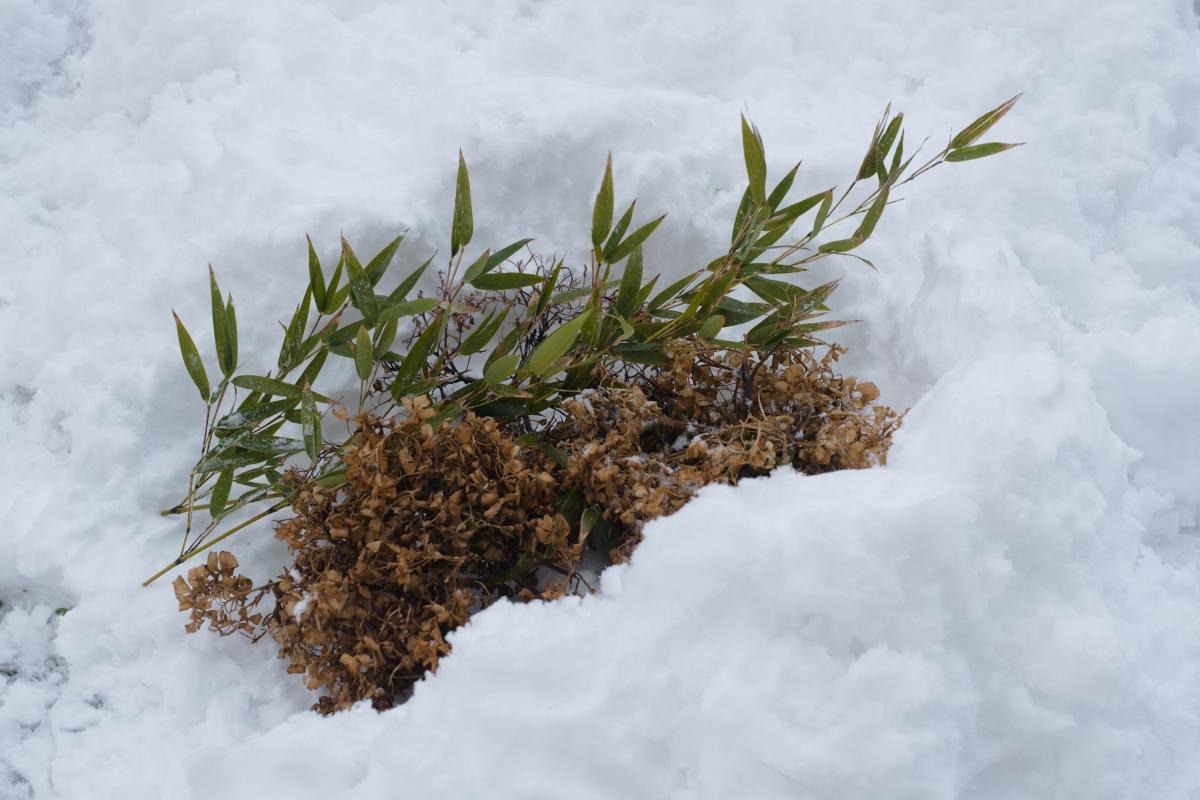 gozu20190126-04 雨でも雪でも特別な道具なしに焚き火をつける方法 五頭山麓いこいの森