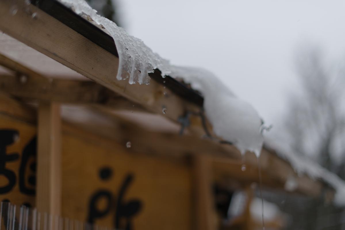 ikoi20190117-02 今年は本当に雪が少ないですね 五頭山麓いこいの森