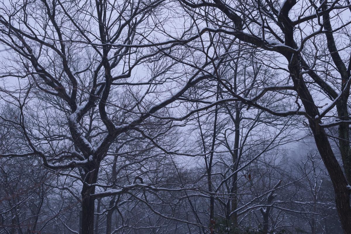 ikoi20190117-04 今年は本当に雪が少ないですね 五頭山麓いこいの森