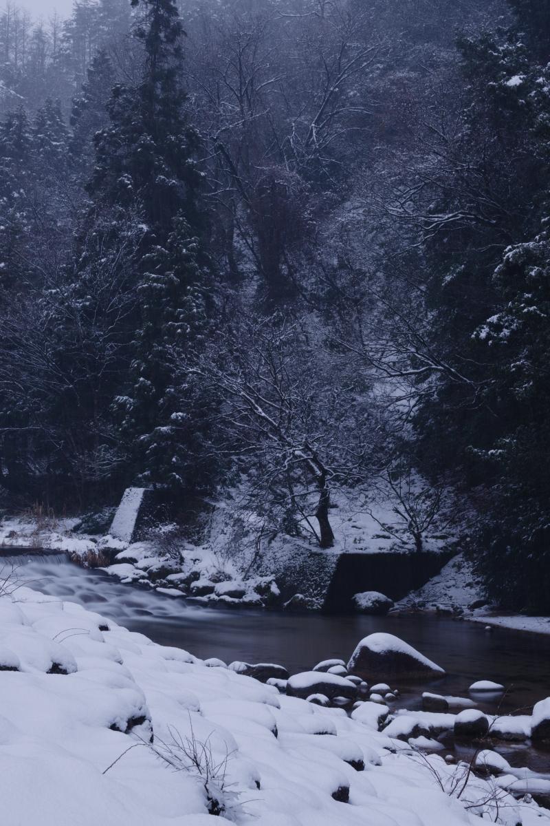 ikoi20190117-05 今年は本当に雪が少ないですね 五頭山麓いこいの森
