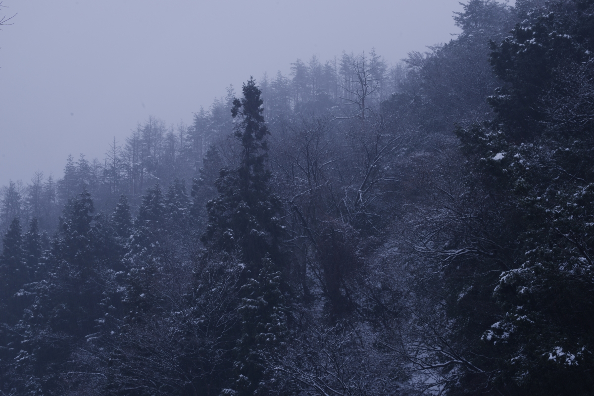 ikoi20190117-06 今年は本当に雪が少ないですね 五頭山麓いこいの森
