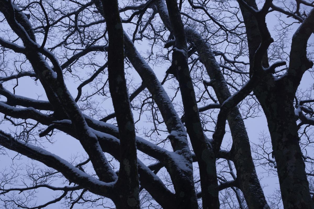 ikoi20190117-07 今年は本当に雪が少ないですね 五頭山麓いこいの森