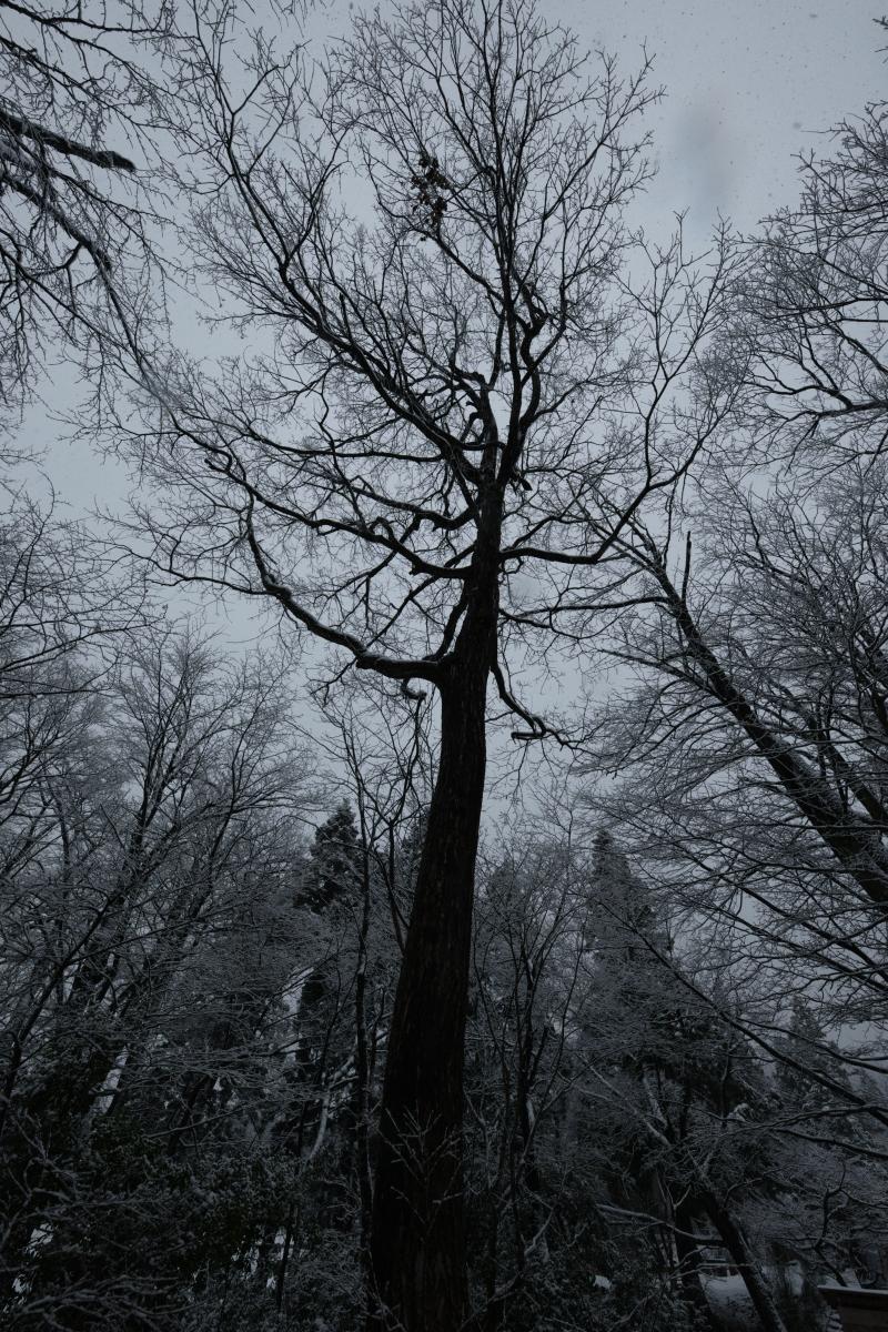 ikoi20190117-08 今年は本当に雪が少ないですね 五頭山麓いこいの森