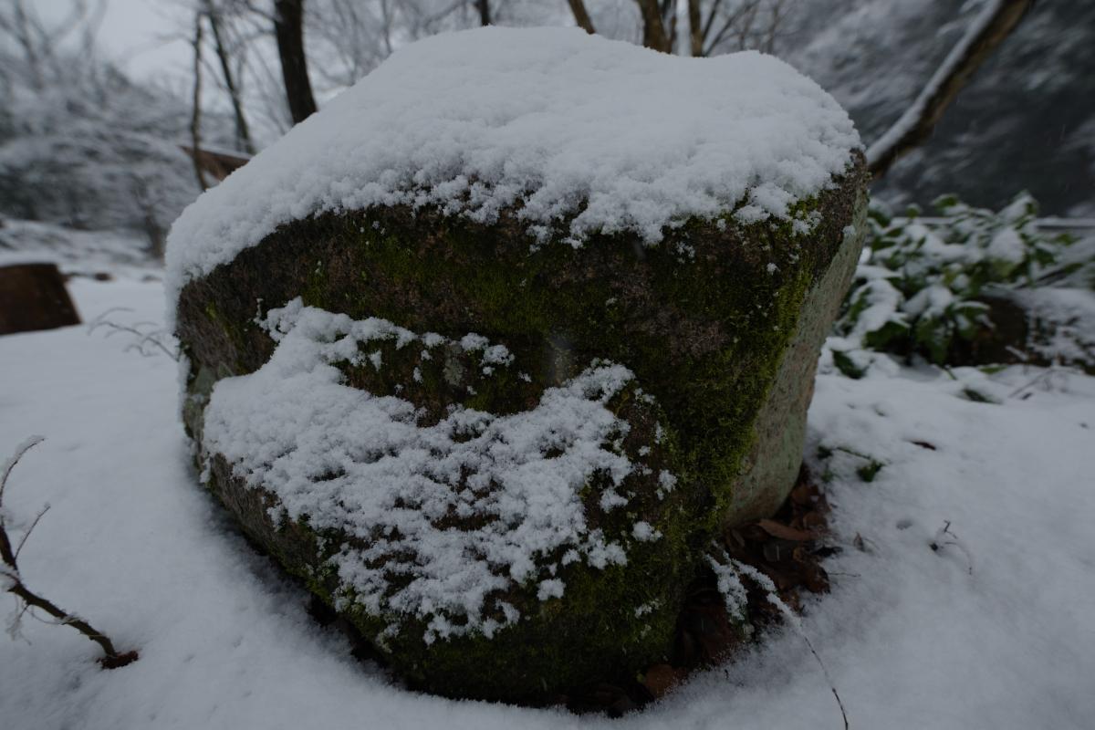 ikoi20190117-09 今年は本当に雪が少ないですね 五頭山麓いこいの森