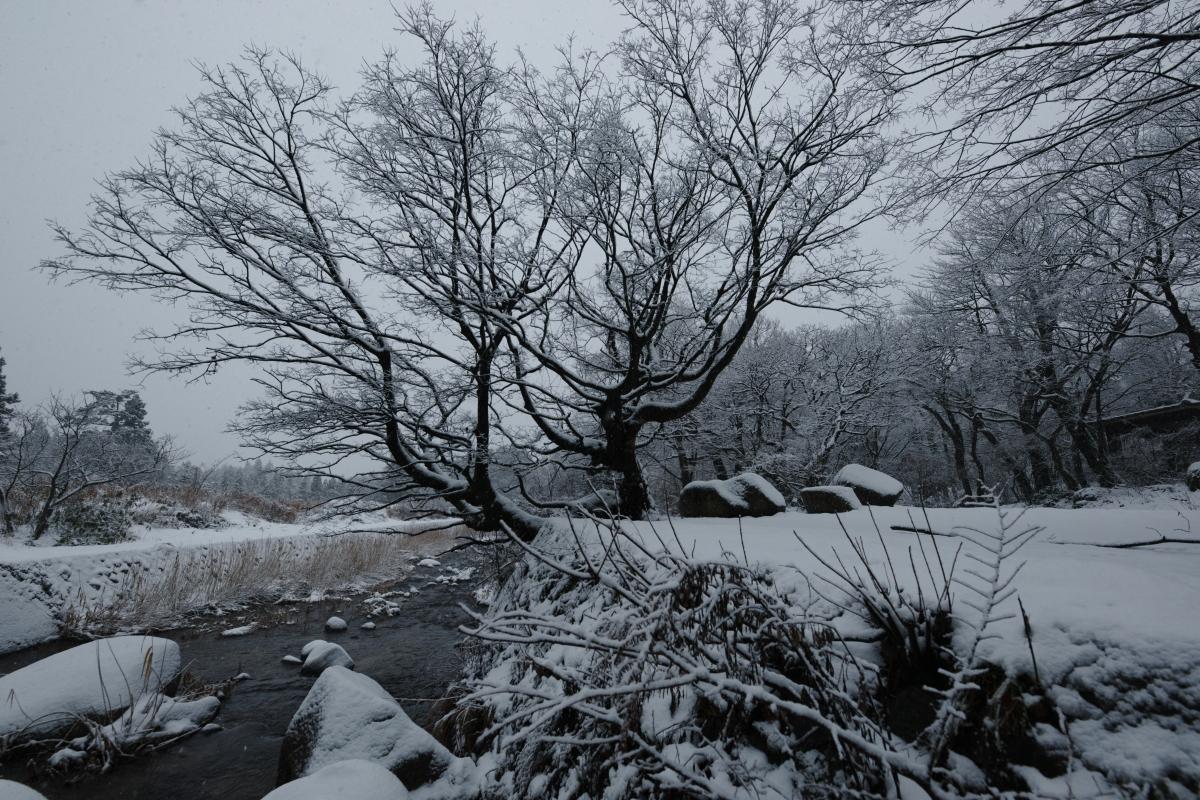 ikoi20190117-10 今年は本当に雪が少ないですね 五頭山麓いこいの森