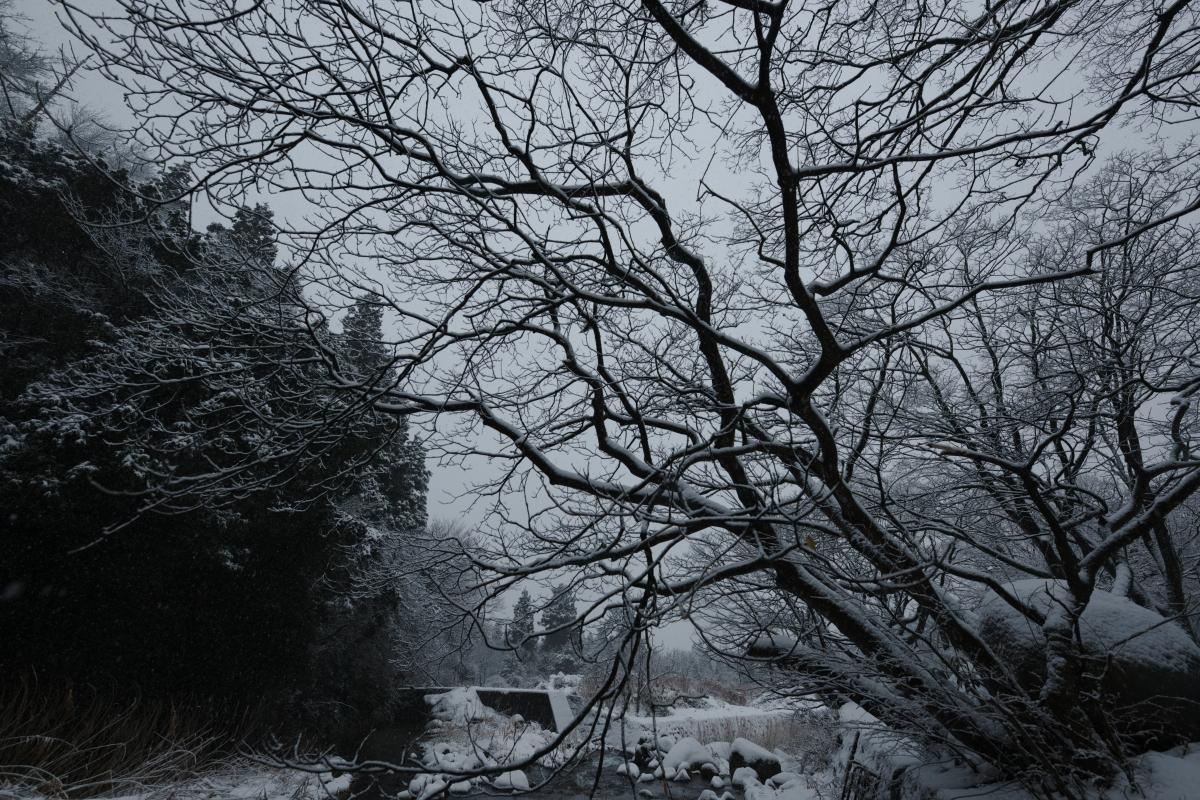 ikoi20190117-11 今年は本当に雪が少ないですね 五頭山麓いこいの森