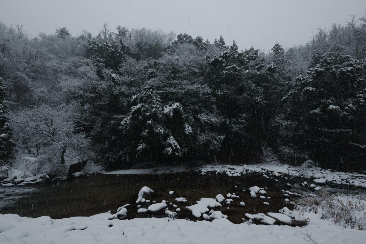 ikoi20190117-12 今年は本当に雪が少ないですね 五頭山麓いこいの森
