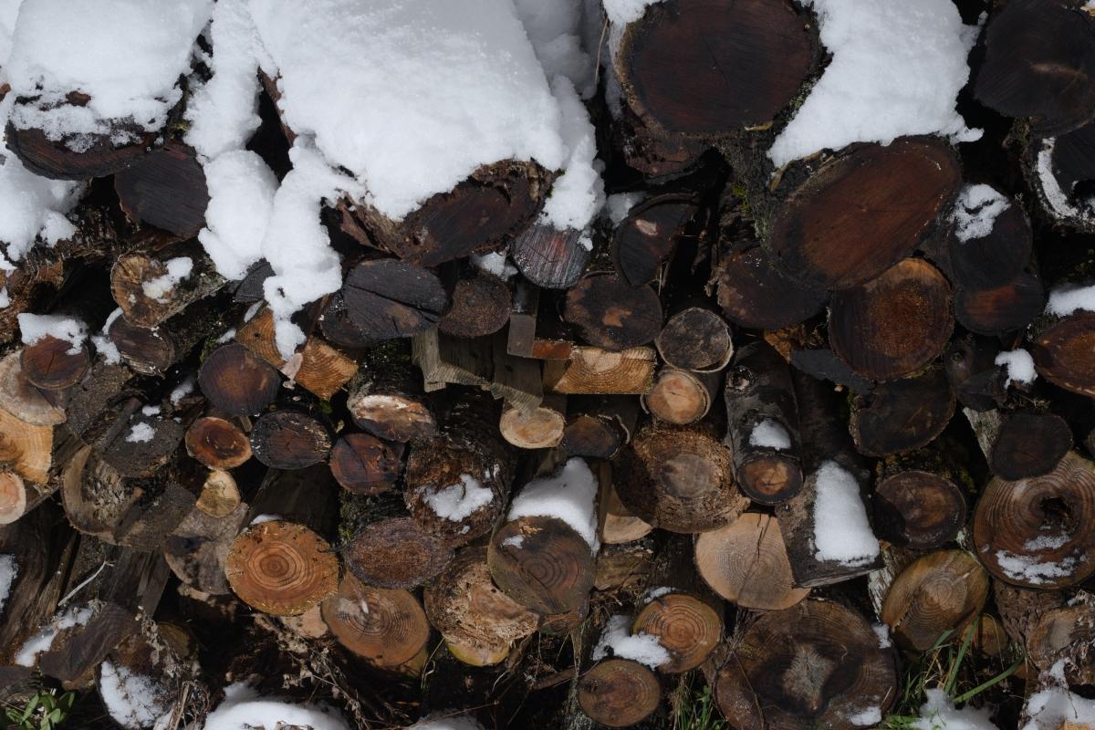 ikoi20190118-04 寒くなってきましたね 五頭山麓いこいの森