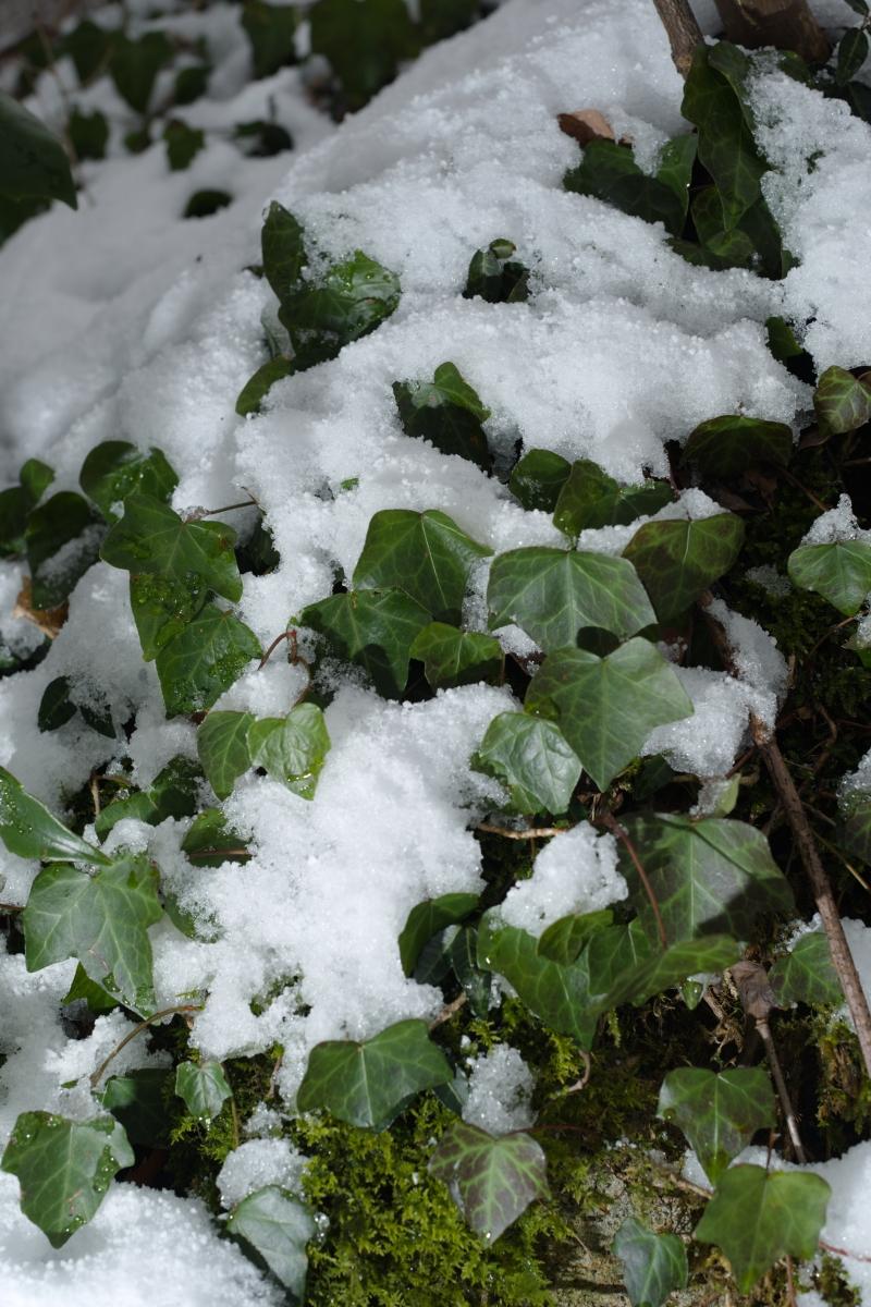 ikoi20190118-05 寒くなってきましたね 五頭山麓いこいの森