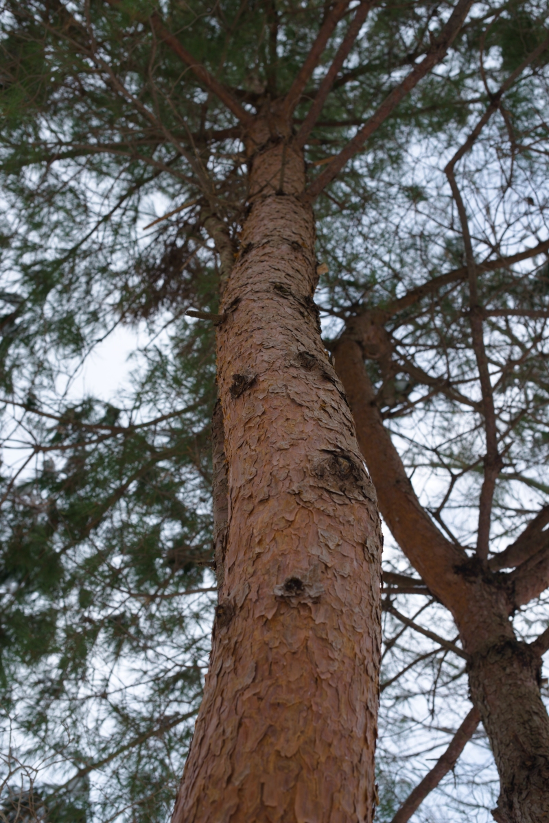 ikoi20190118-07 寒くなってきましたね 五頭山麓いこいの森