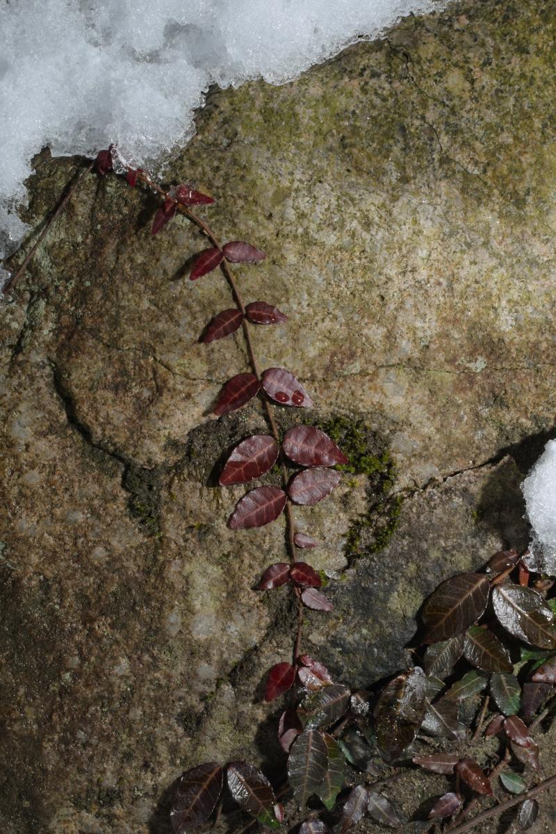 ikoi20190118-11 寒くなってきましたね 五頭山麓いこいの森