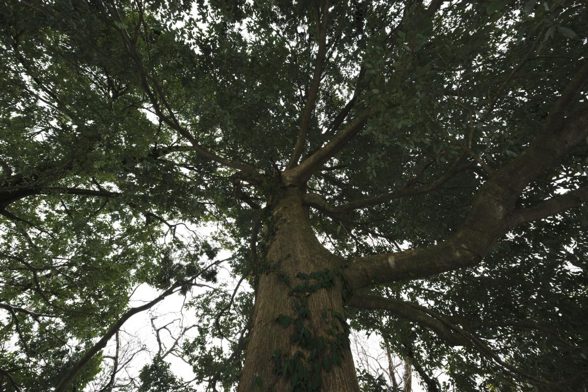 ikoi20190118-16 寒くなってきましたね 五頭山麓いこいの森