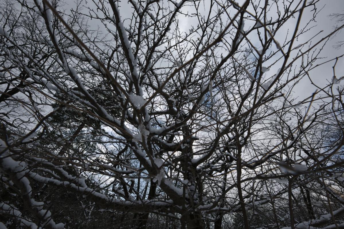 ikoi20190118-18 寒くなってきましたね 五頭山麓いこいの森