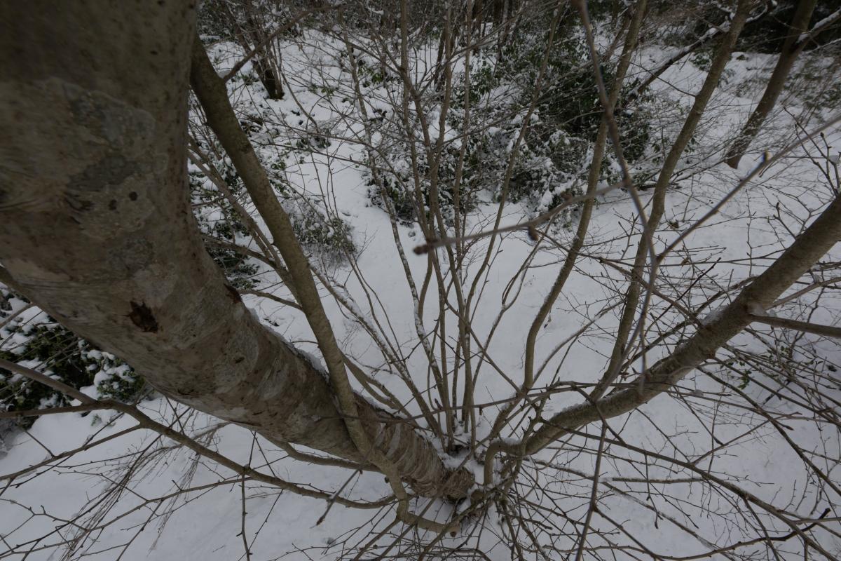 ikoi20190118-19 寒くなってきましたね 五頭山麓いこいの森
