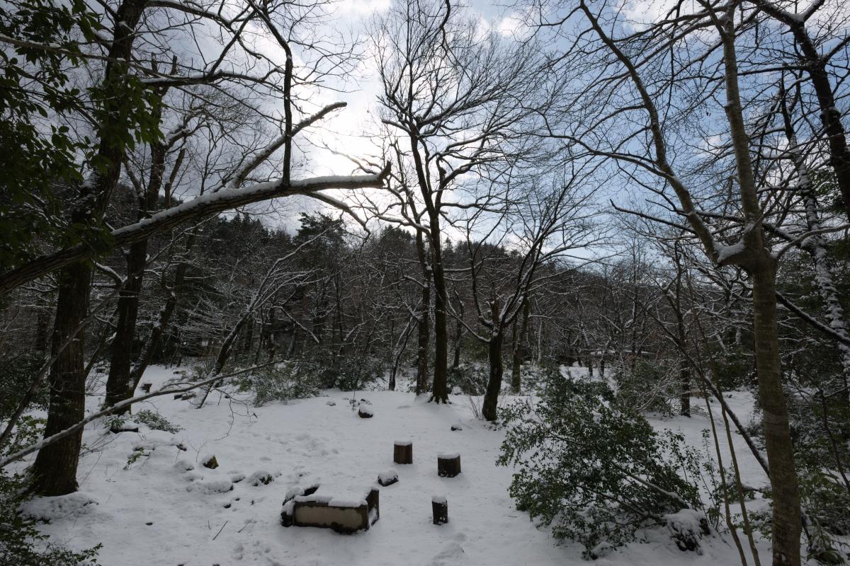 ikoi20190118-20 寒くなってきましたね 五頭山麓いこいの森