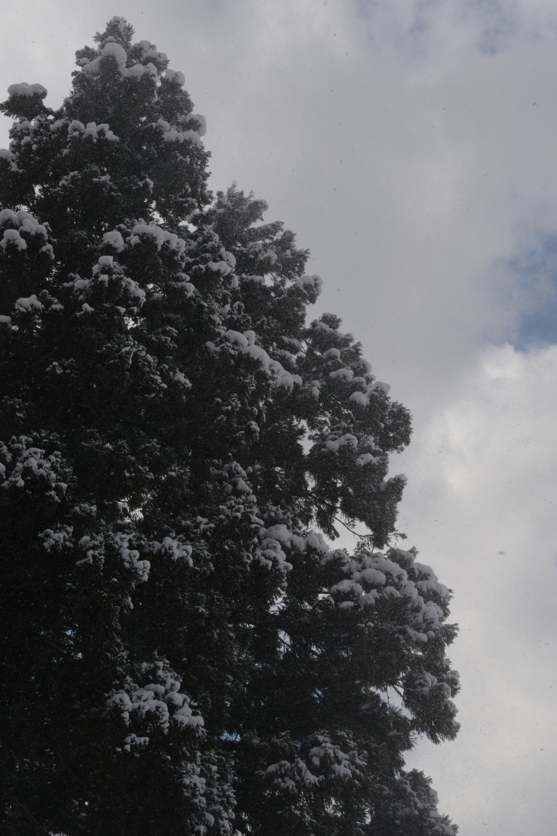 ikoi20190124-01 水道管が凍るぐらいに寒くなってきた 五頭山麓いこいの森
