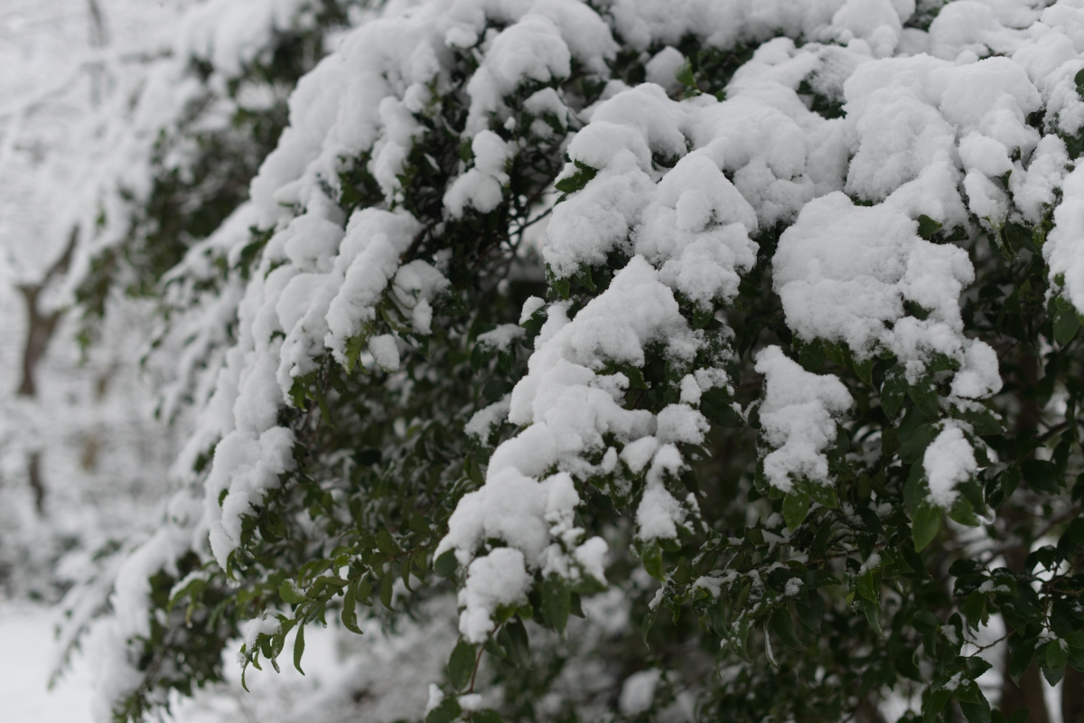 ikoi20190124-04 水道管が凍るぐらいに寒くなってきた 五頭山麓いこいの森
