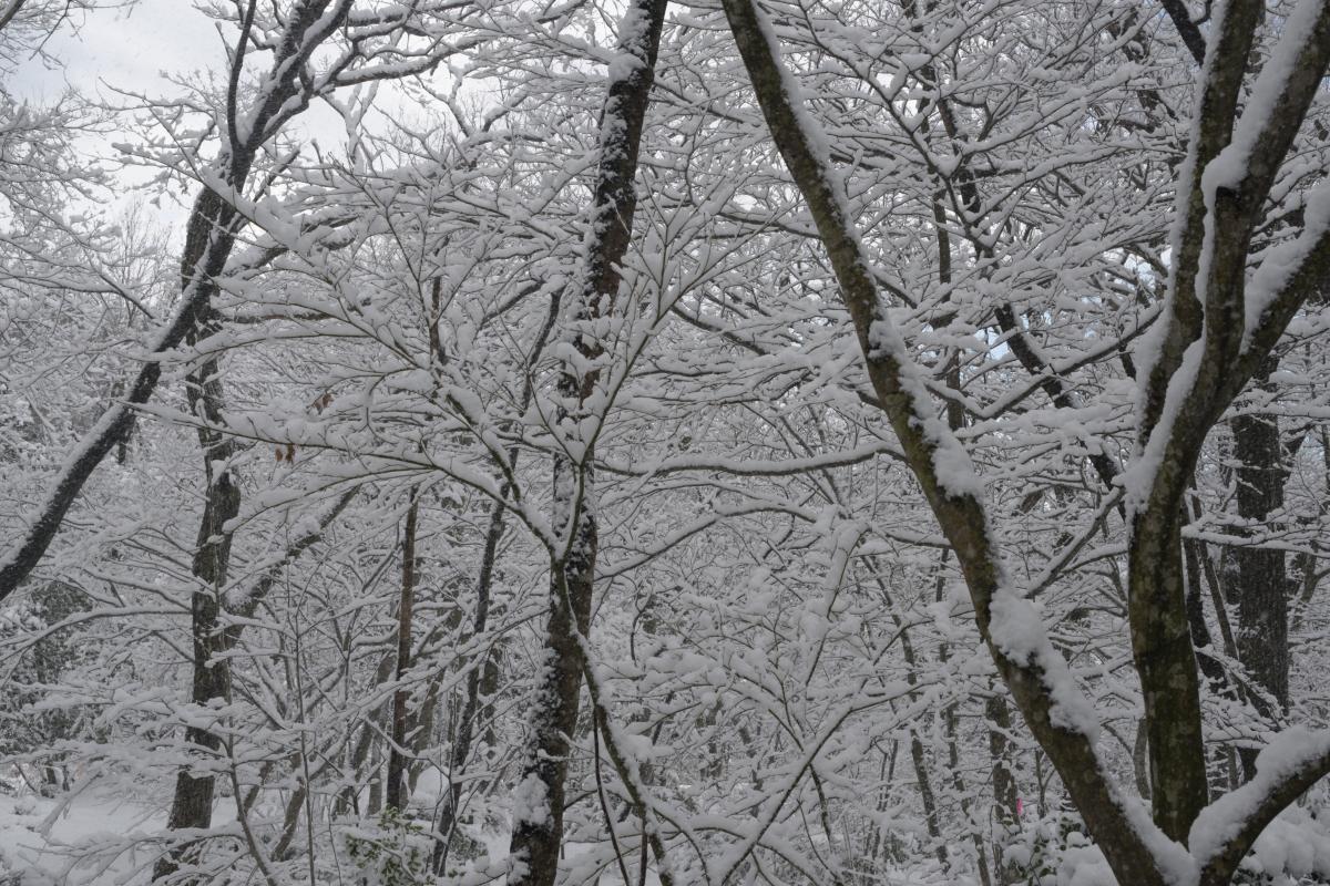 ikoi20190124-05 水道管が凍るぐらいに寒くなってきた 五頭山麓いこいの森
