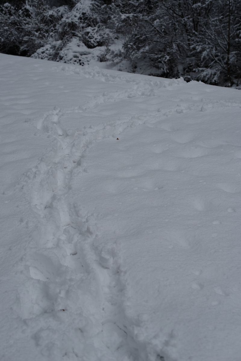 ikoi20190124-08 水道管が凍るぐらいに寒くなってきた 五頭山麓いこいの森