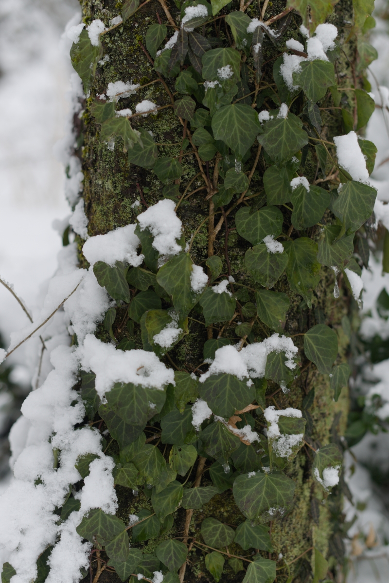 ikoi20190124-10 水道管が凍るぐらいに寒くなってきた 五頭山麓いこいの森