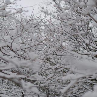 雪と枝だらけ