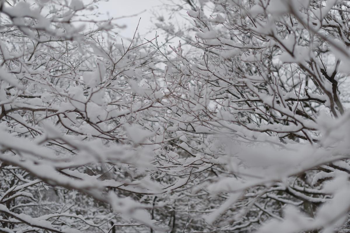 ikoi20190124-13 水道管が凍るぐらいに寒くなってきた 五頭山麓いこいの森