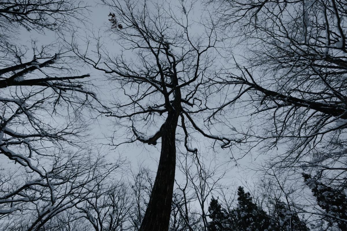 gozu20190202-02 長靴が埋まるぐらいに 五頭山麓いこいの森