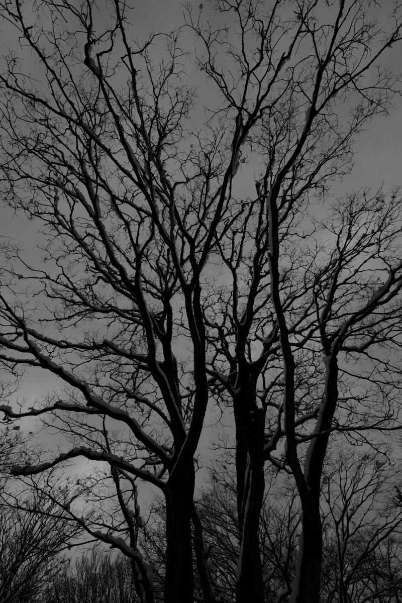gozu20190202-04 長靴が埋まるぐらいに 五頭山麓いこいの森