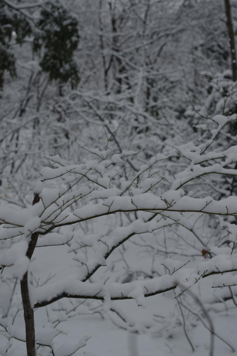 gozu20190208-03 ものすごく寒い中、サルが走って行った 五頭山麓いこいの森