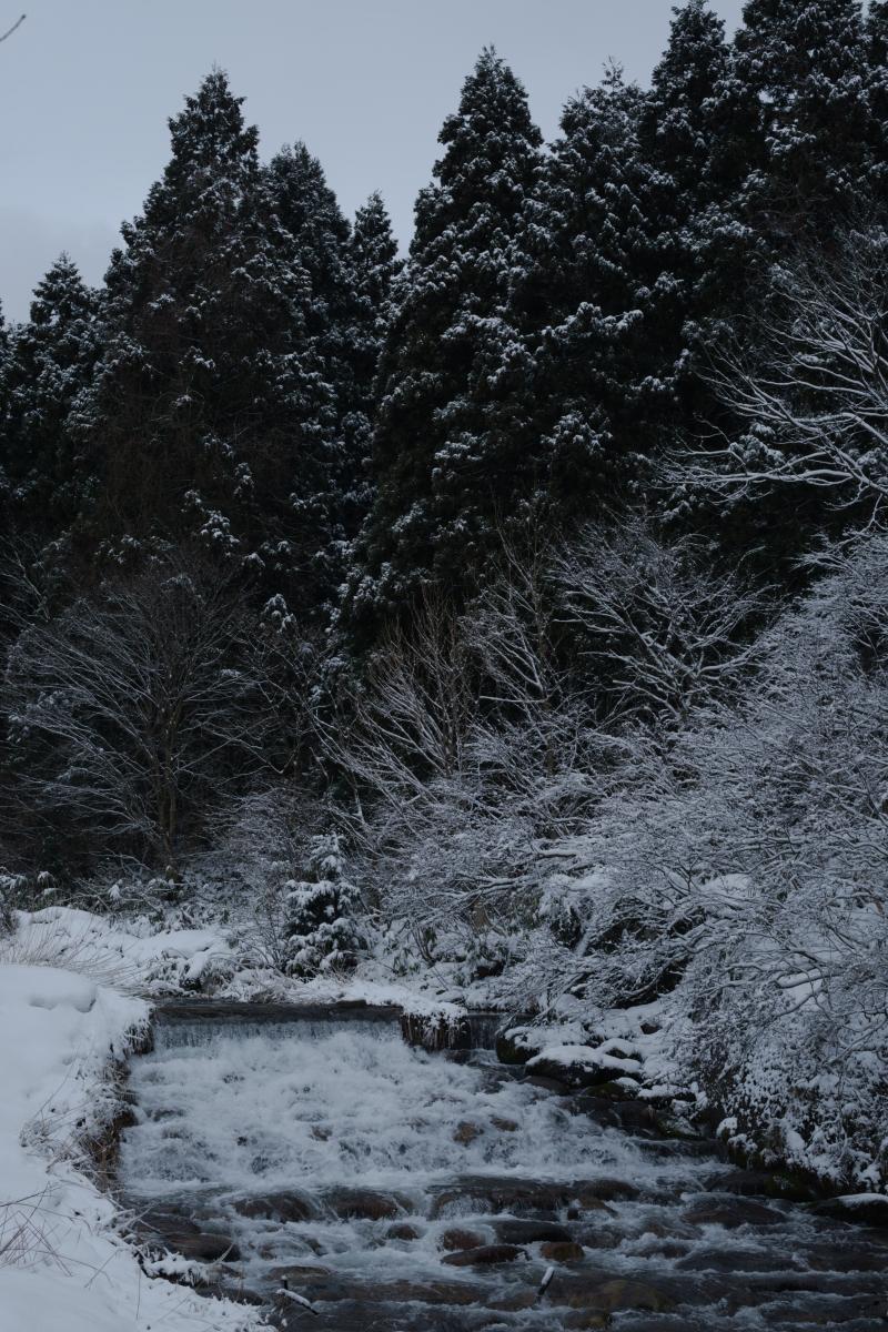 gozu20190208-08 ものすごく寒い中、サルが走って行った 五頭山麓いこいの森