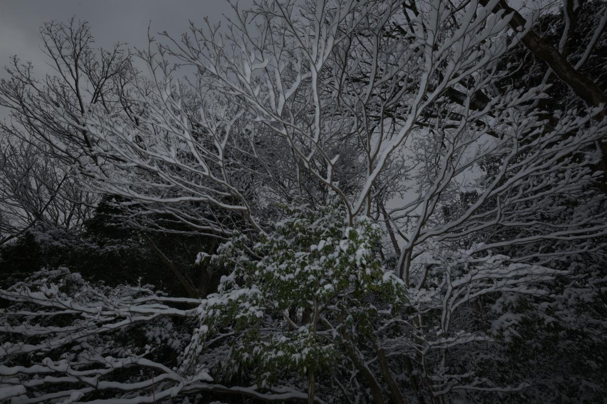 gozu20190208-12 ものすごく寒い中、サルが走って行った 五頭山麓いこいの森