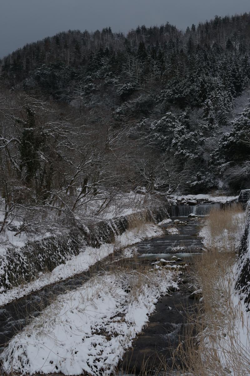 gozu20190208-15 ものすごく寒い中、サルが走って行った 五頭山麓いこいの森