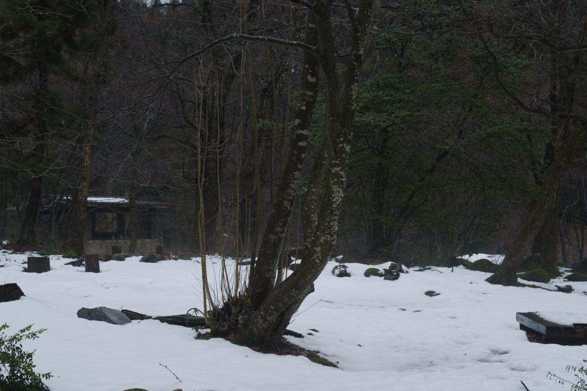 gozu20190220-01 冬なのに雨が降るなんて 五頭山麓いこいの森