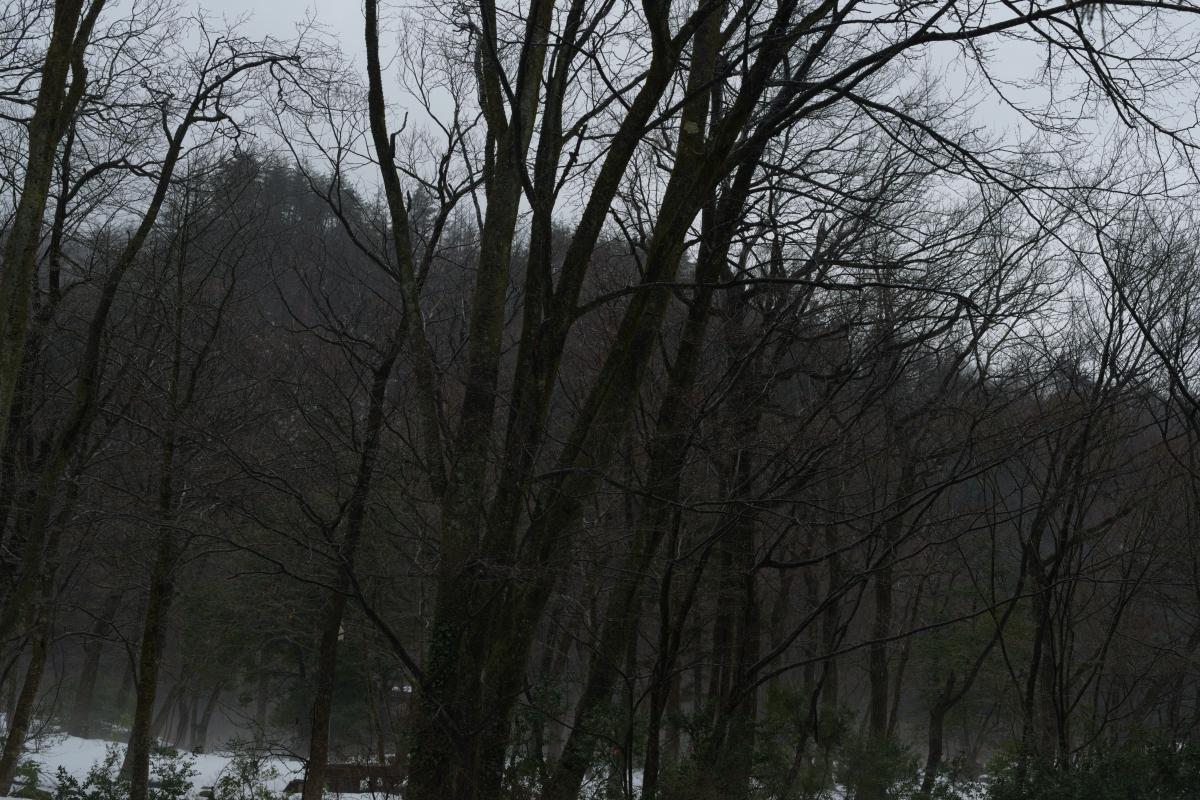gozu20190220-06 冬なのに雨が降るなんて 五頭山麓いこいの森