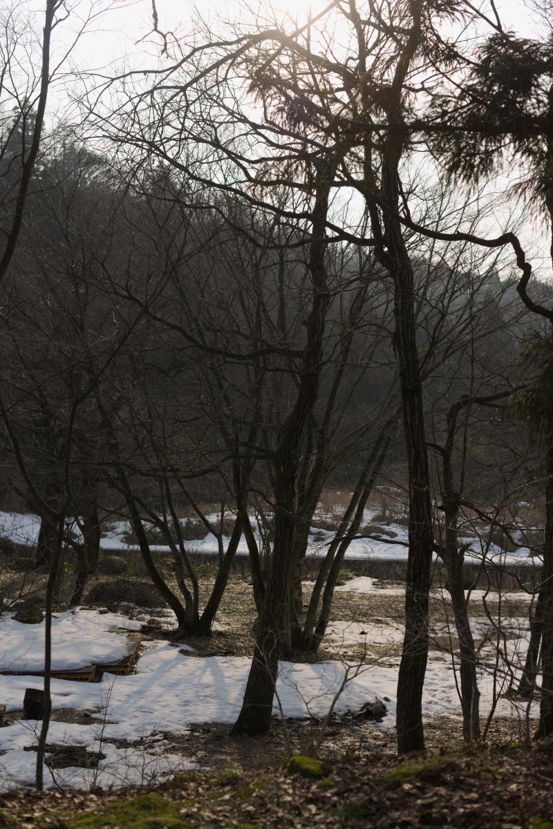 gozu20190222-09 きれいな夕陽が見えた 五頭山麓いこいの森