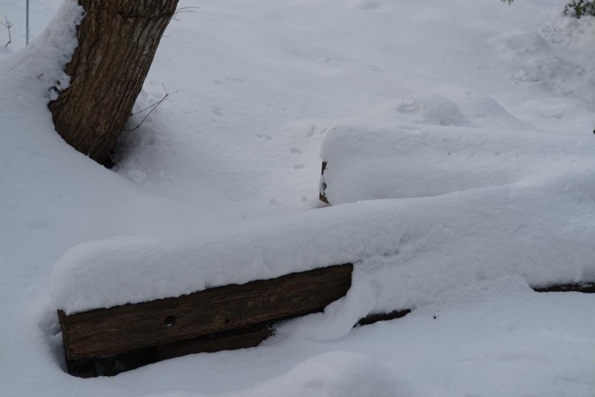 ikoi20190211-01 太陽の出た日は雪が重たい 五頭山麓いこいの森