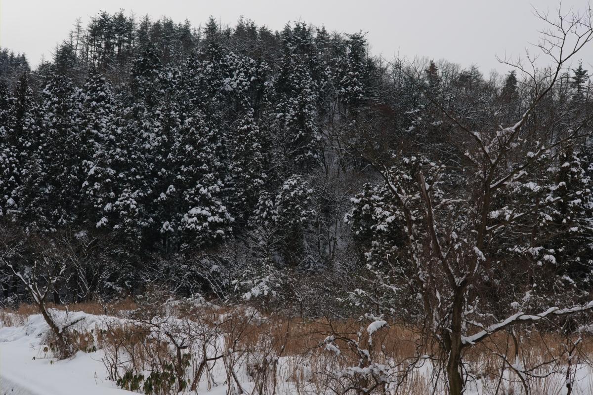 ikoi20190211-02 太陽の出た日は雪が重たい 五頭山麓いこいの森