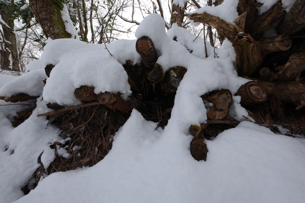 ikoi20190211-04 太陽の出た日は雪が重たい 五頭山麓いこいの森