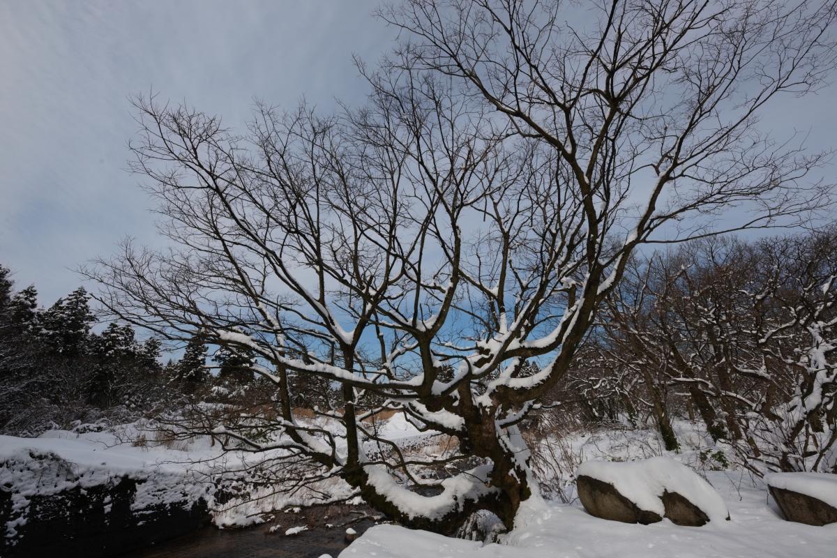 ikoi20190211-08 太陽の出た日は雪が重たい 五頭山麓いこいの森