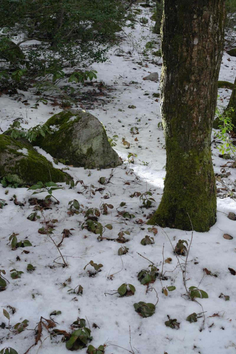 gozu20190308-01 急に寒くなった 五頭山麓いこいの森