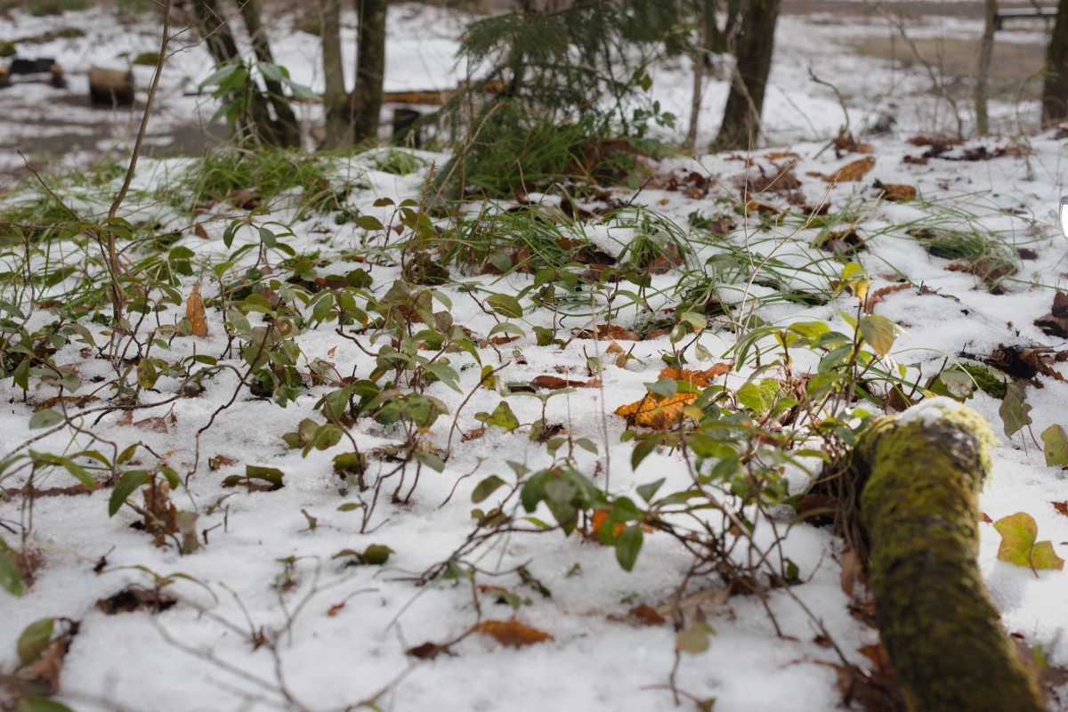 gozu20190308-03 急に寒くなった 五頭山麓いこいの森