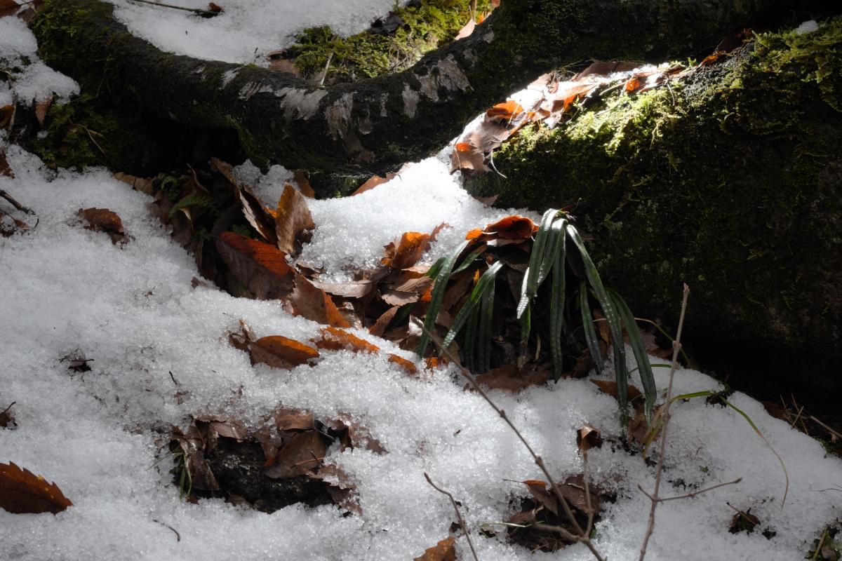 gozu20190308-06 急に寒くなった 五頭山麓いこいの森