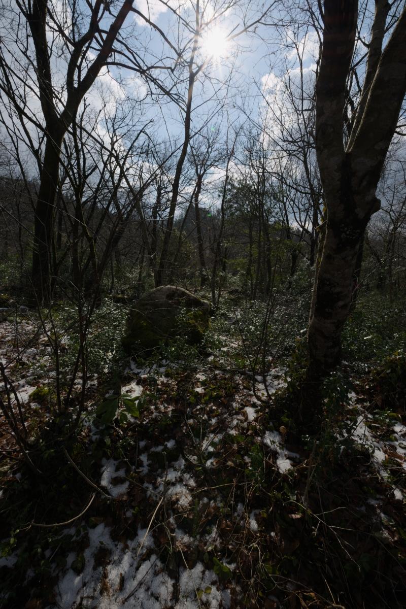 gozu20190308-08 急に寒くなった 五頭山麓いこいの森