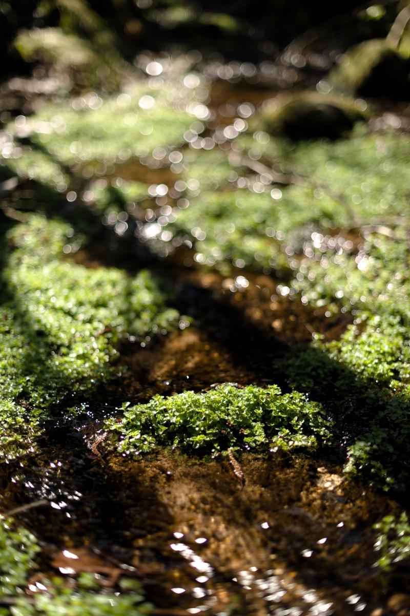 gozu20190309-05 散策やキャンプの問い合わせが増えてきた 五頭山麓いこいの森