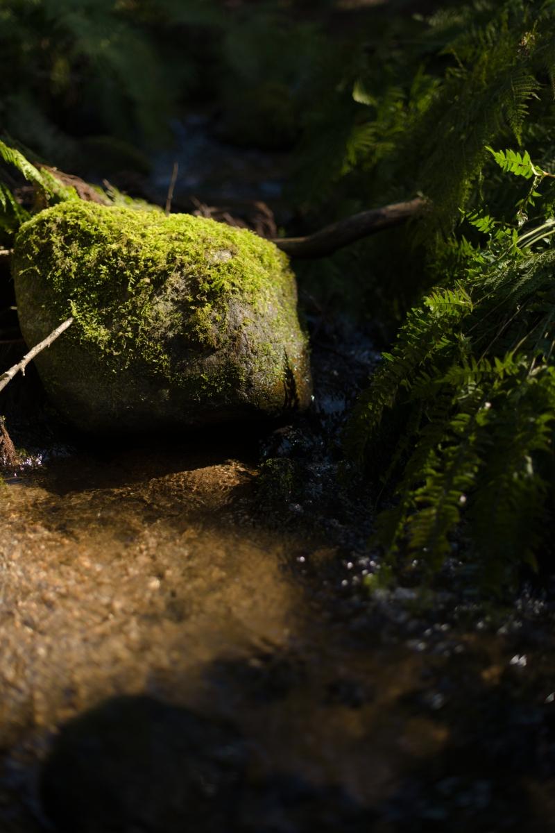 gozu20190309-08 散策やキャンプの問い合わせが増えてきた 五頭山麓いこいの森