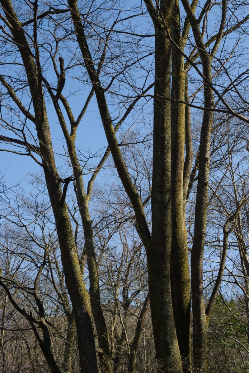 gozu20190309-15 散策やキャンプの問い合わせが増えてきた 五頭山麓いこいの森