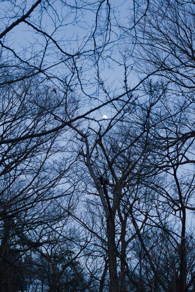 gozu20190312-31 これぐらいのサイズ感です 五頭山麓いこいの森