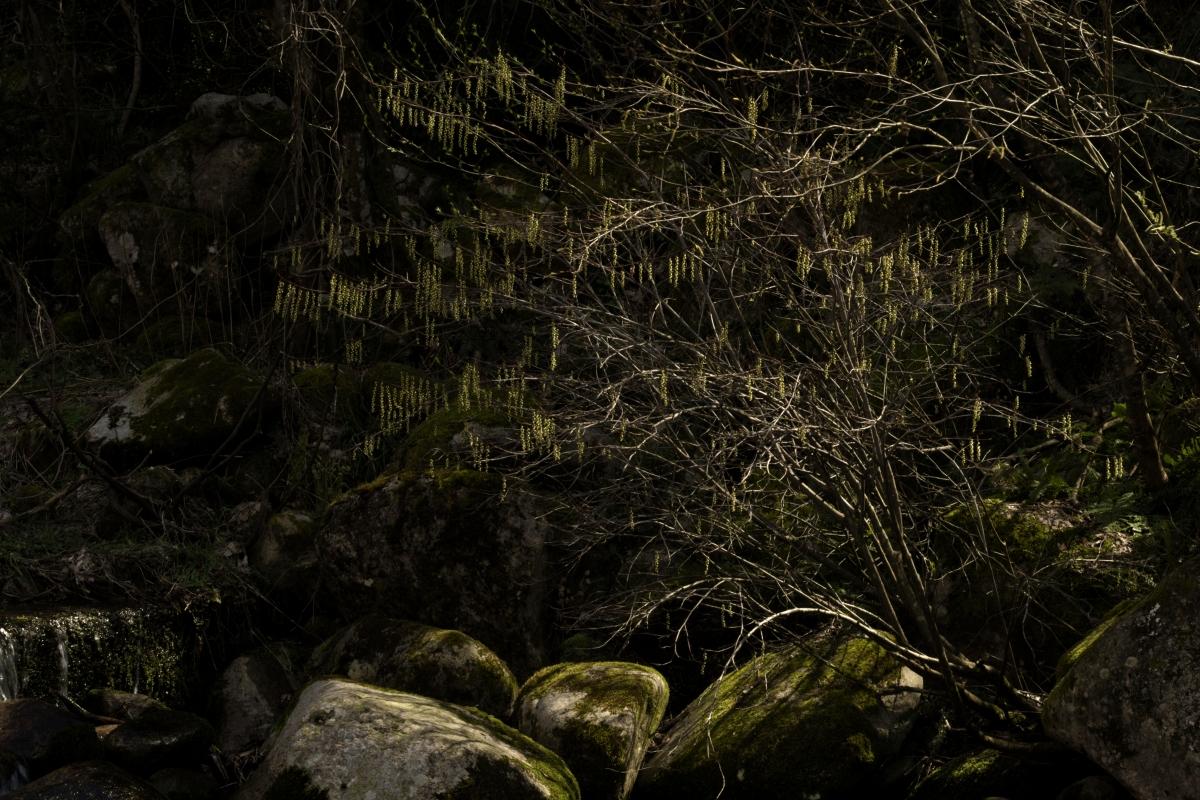 ikoi20190406-05 GWは予約を入れられないぐらいになってきました 五頭山麓いこいの森