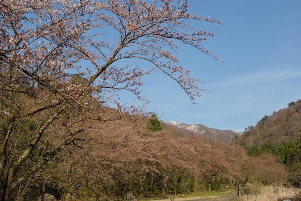 ikoi20190413-07-1024x683 週末はキャンプで楽しもう 五頭山麓いこいの森